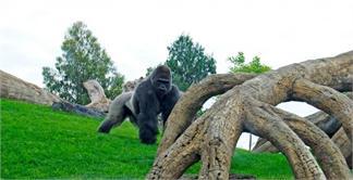 Visita general a zoo en Valencia