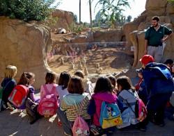 Visita taller Infantil para conocer  animales