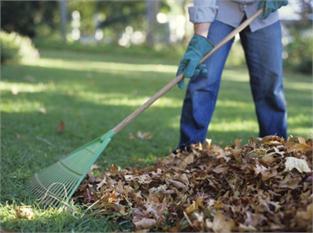 Mantenimiento integral de jardines servicios generales - Mantenimiento de un jardin ...