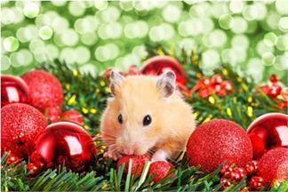 CUENTACUENTOS: Ratas, ratones, ranas y sapos