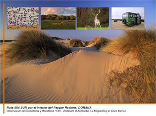 Excursión a Doñana-1