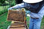 Conoce el mundo de la apicultura-0