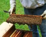 Conoce el mundo de la apicultura