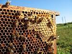 Conoce el mundo de la apicultura-3