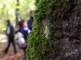 Aulas en la Naturaleza